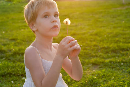 Girl blowing on a dandelion, in the rays of the warm setting sun