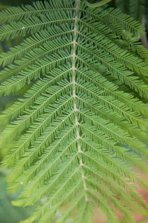 Fern leaf close-up. Natural geometry. Postcard background