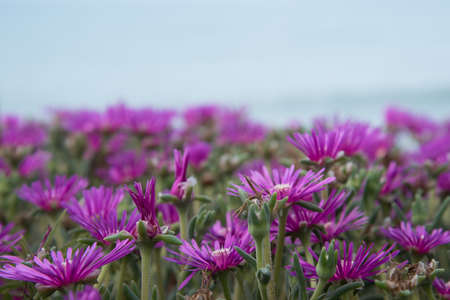 Purple summer flowers. Background texture 版權商用圖片