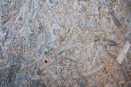 The texture of the slab of wood. Background, tree ecology. Natural natural Archivio Fotografico