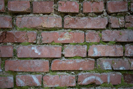 Red brick old wall. Green moss grows on the brick wall. Background or texture.