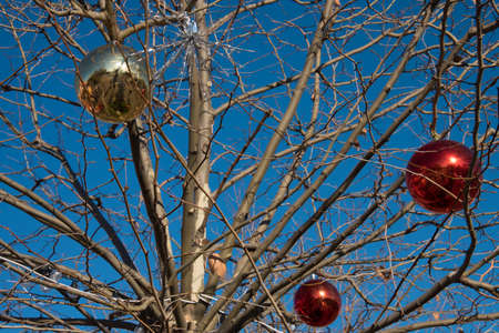 On the street-a tree with green leaves. The tree is decorated for Christmas. New Year. Archivio Fotografico