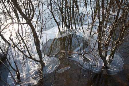 The ice covered the trunks of trees and bushes. Natural natural ice pattern. Frosts