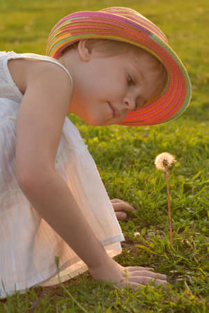 little girl looks at a fluffy dandelion. The rays of the setting sun, glare and backlight. The concept of childhood dreams and innocence