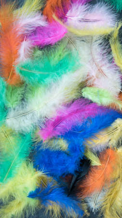 Feathers of different colors. Background, feather texture. An abundance of color