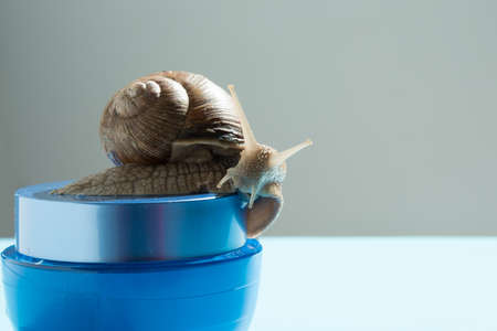 A snail on a jar of cream. The concept of environmental friendliness of cosmetics. Background