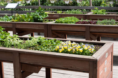 Exhibition or sale of flowers in the open air. Flowers are in large wooden display cases Stok Fotoğraf