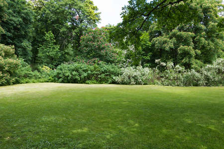 A lush green meadow surrounded by flowering bushes and trees. Positive summer picture. There is a place for text