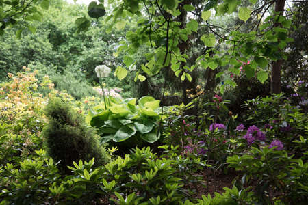 Landscaping. A path among various flowers and shrubs. Well-groomed plants Stok Fotoğraf