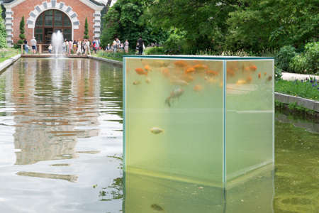Orange koi carps swim in a glass cube. The cube is located above the surface of the water. Pisces are watching people