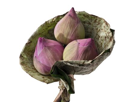 Lotus flowers, Bouquet of Pink lotus flowers isolated on white background