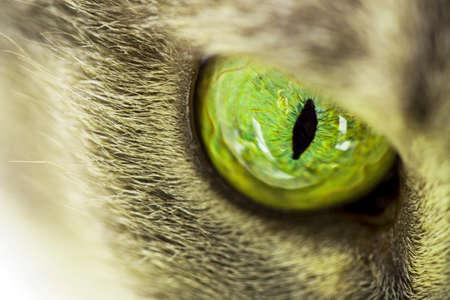 eye green: Gatos ojo verde de cerca Foto de archivo