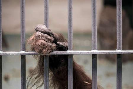 captivated: Captivated animal a monkey