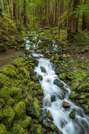 sol duc: Rain Forest and Cascades along Sol Duc Falls Trail