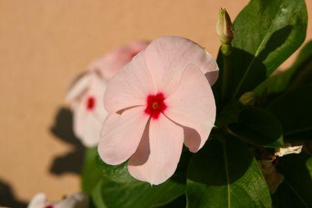 flower in my garden Stock Photo