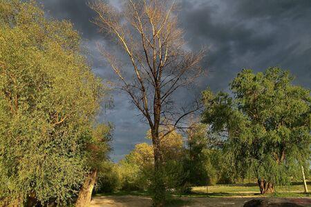 Nature on shore of river Danube in Petrovaradin 3
