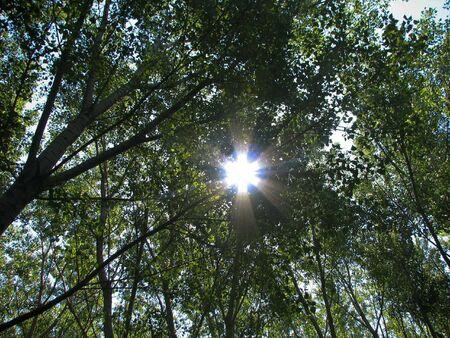 ramification: Sun shine  through the ramification