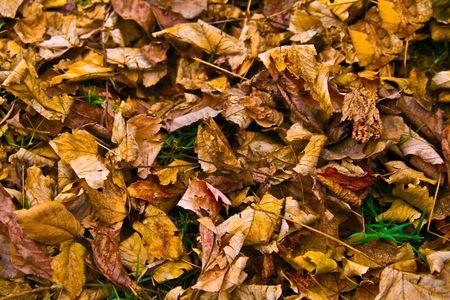 Autumn - yellow leaves 2 Stock Photo