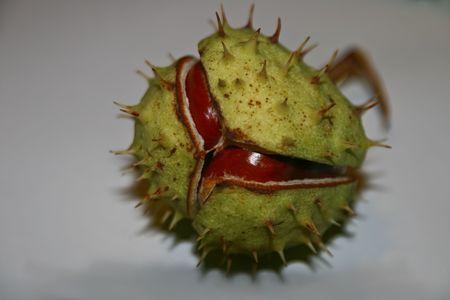 Chestnut 2 Stock Photo