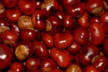 Chestnut 7