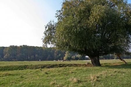 Shot of grass land and nature around the farm yard.