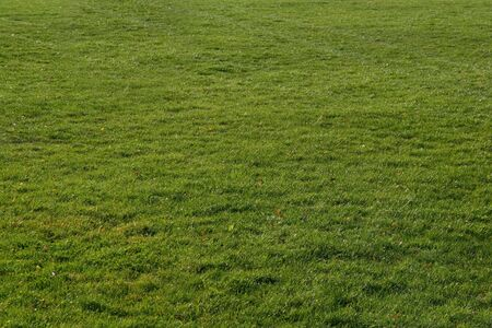 shot of grass - land meadow with beautiful green color in autumn