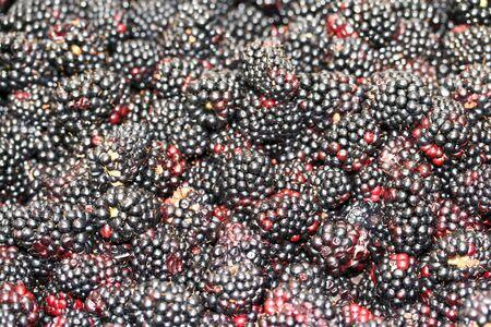 nice food: this is a close up shot of bundle of blackberries, like nice food background