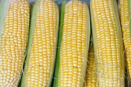 this is a close up shot of bundle of corn, like nice food background Stock Photo