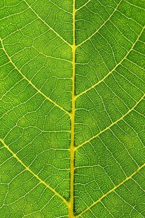 this is a close up shot of green leaf like nice nature background