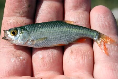 this is a close up shot of little fish in my hand