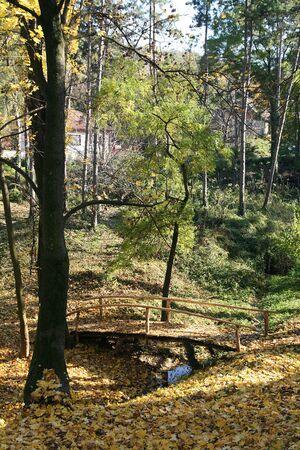 Dies ist eine kleine Holzbr�cke �ber den Fluss, bedeckt mit gelbe Bl�tter im Herbst