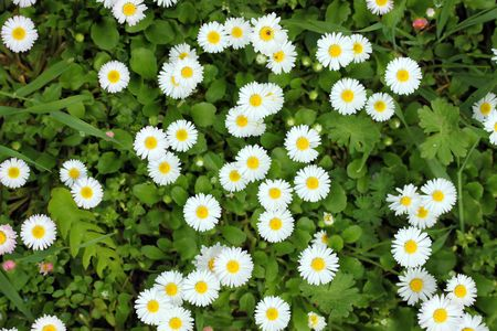 This is a closeup shot of daisy flower, shallow dof. Stock Photo