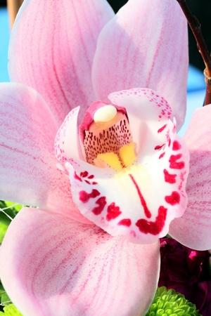 Pink Orchid, closeup shot by sunny day. Stock Photo - 12687658
