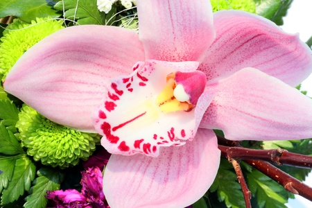 arrangment: Pink Orchid in green flower arrangment. Stock Photo