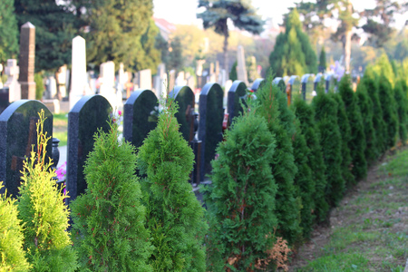 Reihe von leeren Thumbstone auf dem Friedhof.