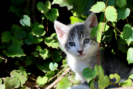 Small domestic cat peering out of the greenery