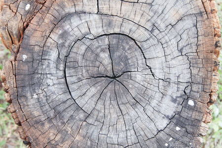 felled: Stumps were felled many years in the forest