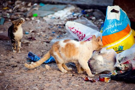 Hurghada, Egypt, 17.04.2019, Cats sit in the trash. Concept protection of stray animals Фото со стока