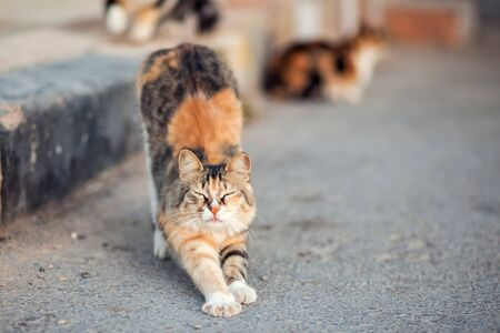 Homeless cute cats on the street. Animal protection and adoption concept