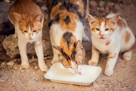 Hungry tray cats eating food on the street. Pet protection concept Imagens