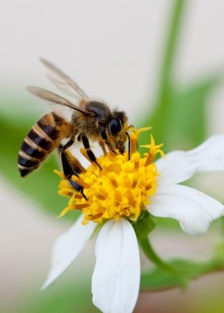 Bee on duty Stock Photo - 18943140