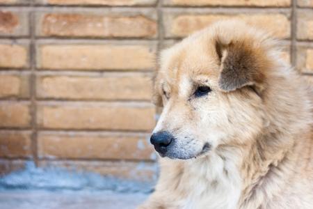 spiritless: spiritless dog
