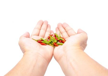 fresh chilli in hands on white background