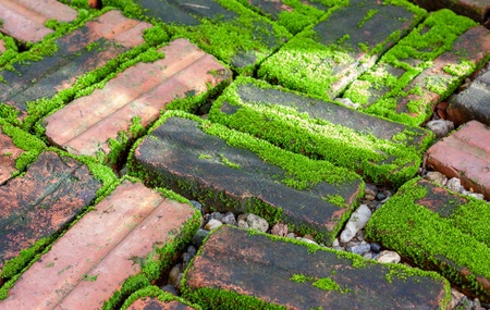 mossy on damp brick in the morning light photo