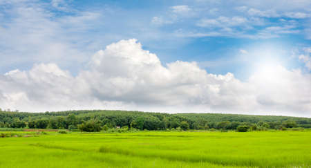 view of ricefield and hill of rubber plantation with beautiful sky  Stock Photo