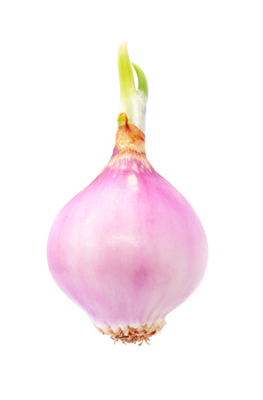onion growing isolated on white