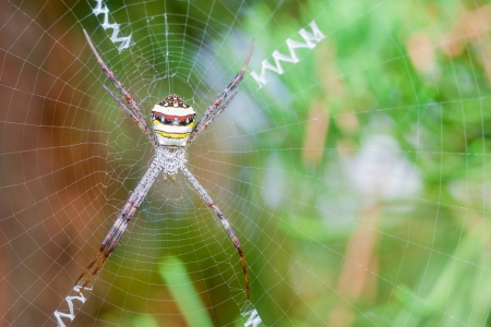 spider Stock Photo - 24684432