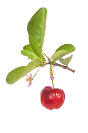 acerola with leaf and flower isolated on white Stock Photo