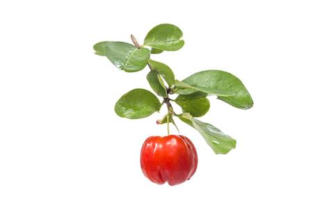 acerola fruit with leaf isolated on white Reklamní fotografie - 32054383
