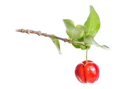 acerola fruit on branch isolated on white Stock Photo